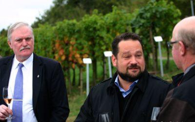 Weinlese 2015 in Baden: Geringere Mengen bei guter Qualität