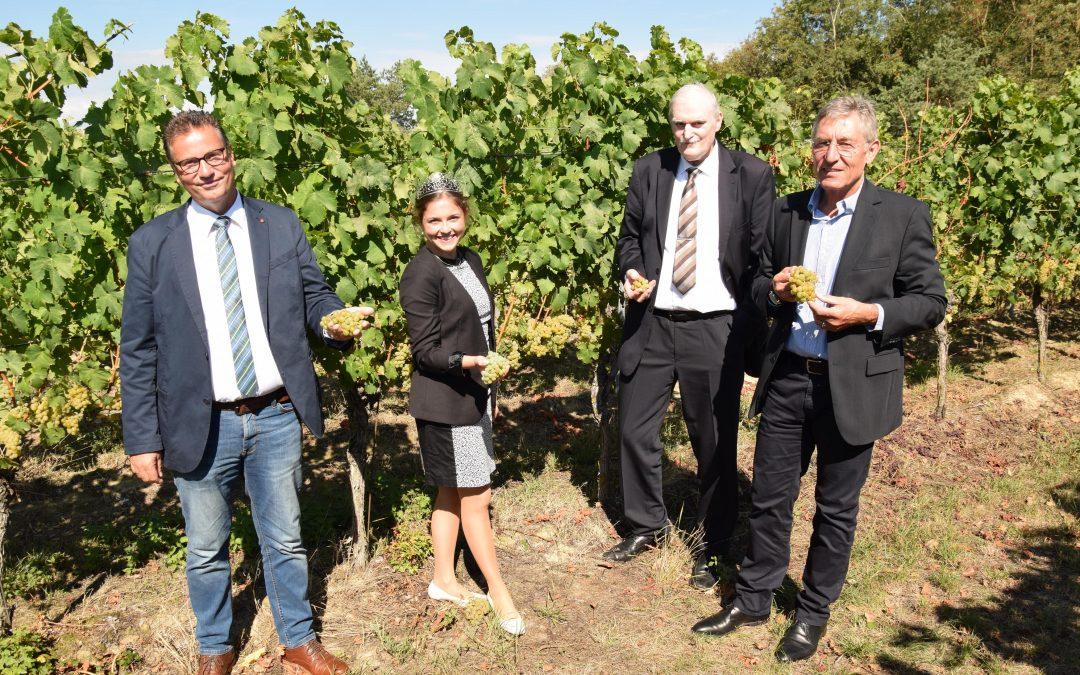 Minister Hauk gibt Startschuss für die Weinlese inBaden