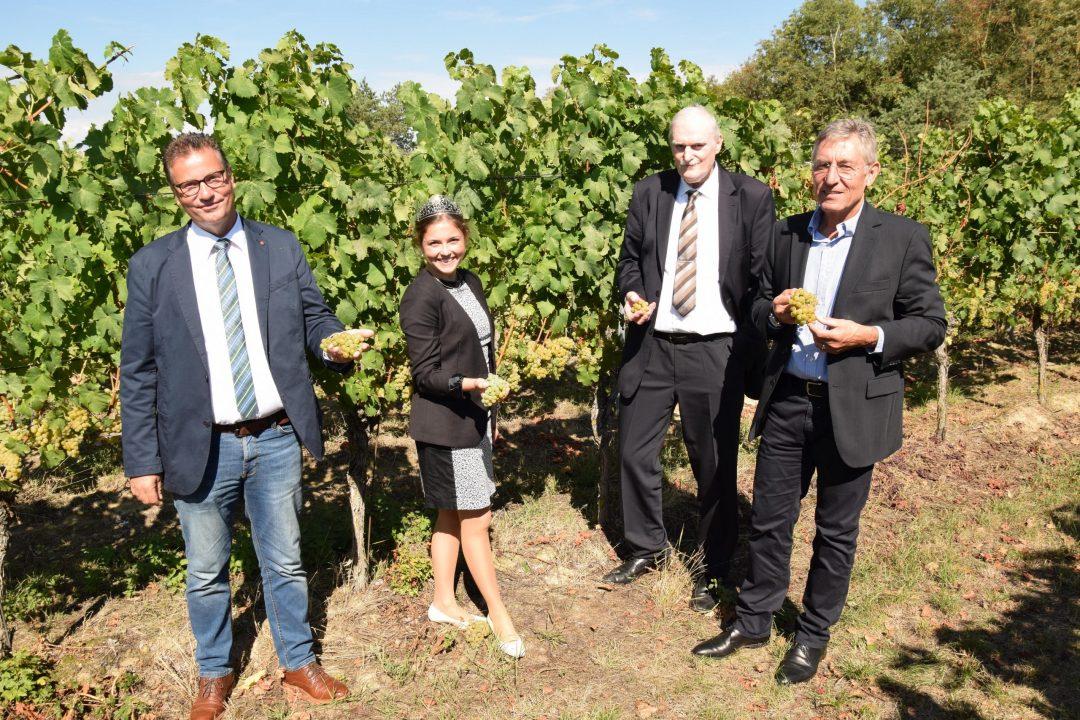 Herbstpressekonferenz: Minister Peter Hauk (li.) begutachtet den Jahrgang zusammen mit Weinkönigin Sina Erdrich, Peter Wohlfarth und Rainer Zeller